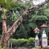 Rain in the Temple Gardens