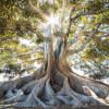 Grounding Visualisation-Tree Meditation
