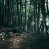 The Magical Forest Sleep Meditation
