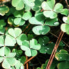 Affirmations to Attract Luck & Money