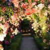 The Sleepy Garden of Gratitude Meditation