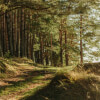 Morning Forest: Attention Restoration