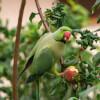 Merchant & the Parrot